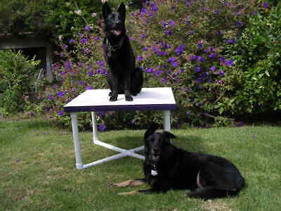 Dog Agility Equipment Pause Table (includes base & top)