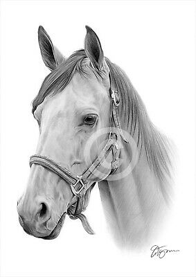 HORSE Pencil Drawing Print A3 / A4 sizes signed by artist Gary Tymon