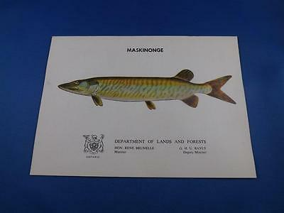 Maskinonge Information Booklet Department Lands And Forests Ontario Fish