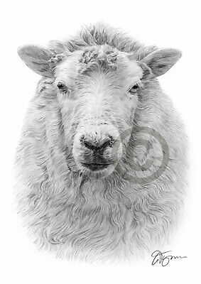 SHEEP Pencil / Graphite Print A4 / A3 signed by artist Animals Realism
