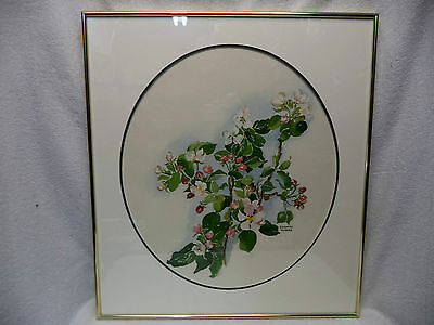 Lovely Watercolor Painting Apple Blossoms Signed Frances Turner Nova Scotia