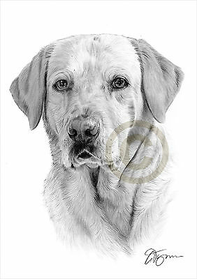 LABRADOR RETRIEVER artwork pencil drawing A3 / A4 sizes pet portrait dog art