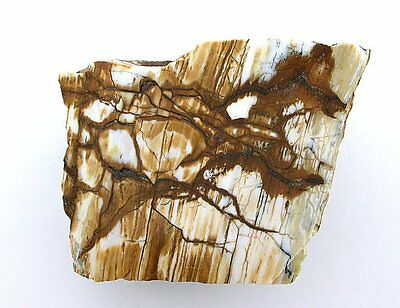 94.2 Gram Opalized Opal Picture Jasper Slab Cab Cabochon Gemstone Rough OS6