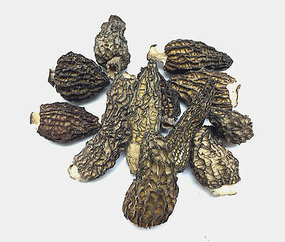 1 lb Fresh 2 oz Dried Montana Morel Mushrooms Top Quality Restaurant Grade A