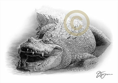 CROCODILE pencil drawing art print A4 / A3 signed by UK artist wildlife
