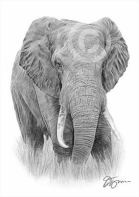 AFRICAN ELEPHANT artwork pencil drawing print A3 / A4 sizes signed art