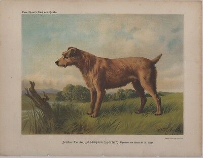 Irish Terrier Chromolithograph Antique Dog Art, Shaw's Book of the Dog c.1880