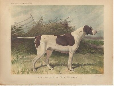 "Pointer Antique Chromolithograph, ""Wagg"", Cassell's Illus. Book of the Dog 1890"