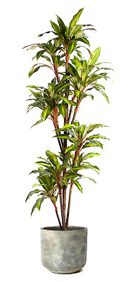 Best Artificial 6ft Dracaena Dragon Tree Plant Tropical Conservatory Office new