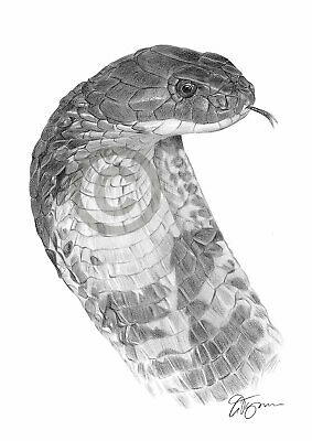 KING COBRA Snake pencil drawing art print A3 / A4 sizes signed by UK artist