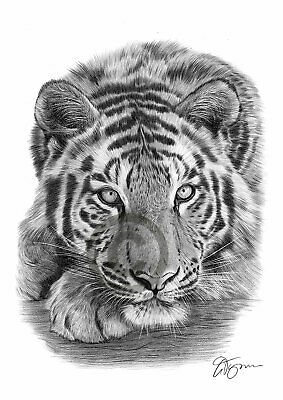 SUMATRAN TIGER Pencil / Graphite Print A4 / A3 signed by artist Animals Realism