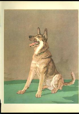 1932 DIANA THORNE DOG Print- GERMAN SHEPHERD-Vintage Book illustration-8x10 inch