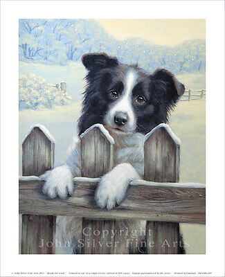 BORDER COLLIE PORTRAIT. SIGNED & NUMBERED LTD EDITION PRINT by JOHN SILVER. BA