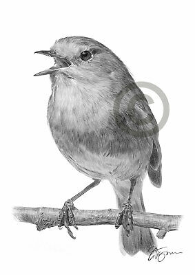 ROBIN REDBREAST Bird pencil drawing art print A4 only signed artwork