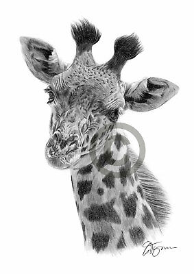 GIRAFFE pencil drawing art print A4 / A3 signed by UK artist artwork