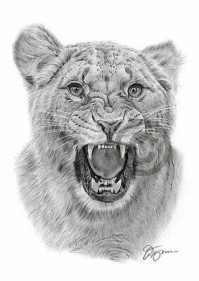 ANGRY LIONESS Pencil / Graphite Print A4 / A3 signed by artist Animals Realism