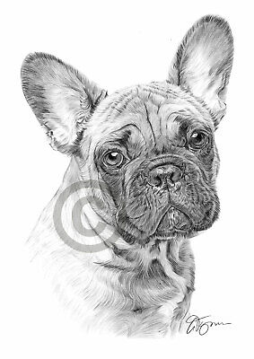 FRENCH BULLDOG art pencil drawing print A4 only signed by artist Gary Tymon