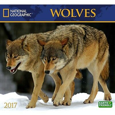 National Geographic Wolves Wall Calendar