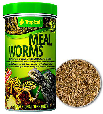Meal Worms dried meal worms for reptiles Tropical