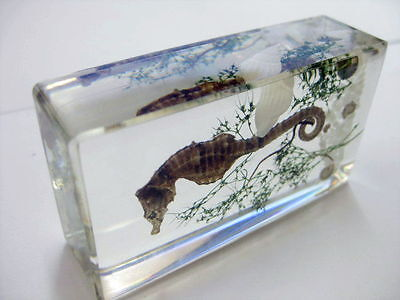 Real Insect Lucid Cool Vogue Paperweights Attractive Trendy Specimen