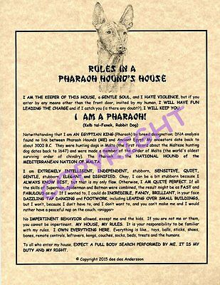 Rules In A Pharaoh Hound's House