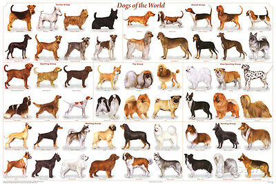 Laminated Dogs of the World Educational Animal Chart Poster Laminated Poster