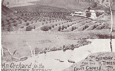 Postcard An Orchard in Bridgetown District Western Australia by The Sunday Times