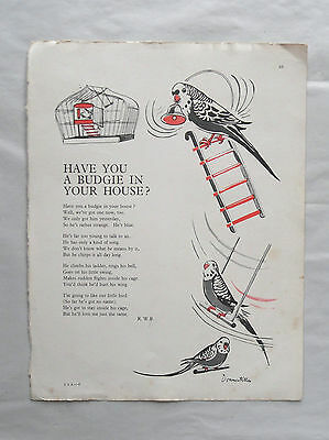 1950s Colour Nursery Illustration. Have you a Budgie in your House? 50s Graphics