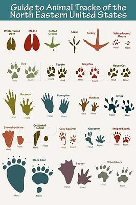 North Eastern Animal Tracks Poster - 24x36