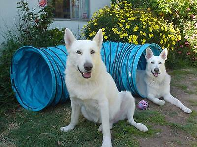 "New 6'  Vinyl Dog Agility Equipment Tunnel (4 "" ring spacing) Free US Shipping!"