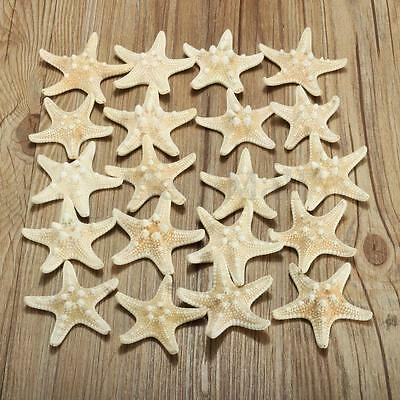 20pcs White Bleached Real Knobby Starfish Wedding Display Sea Shell Craft Decor