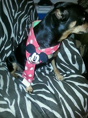 Disney Pet Holiday Christmas Mickey Neckwear Dog Scarf One Size Fits Most AAID