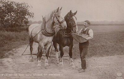 Grace Before Meals Antique Horse Horses About To Eat Old Real Photo Postcard