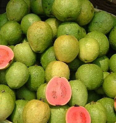5 Pink Guava Seeds Tasty Sweet Tropical Fruit