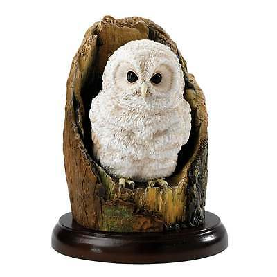 Border Fine Arts Birds of Prey Tawny Owlet Figurine New Boxed A27209