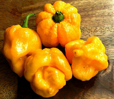 Vegetable  Hot Chilli Pepper 7 Pot Yellow  10 Seeds  Very Hot