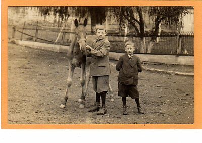 Real Photo Postcard RPPC - Two Boys with Foal - Horse Colt