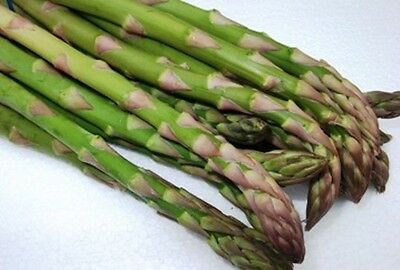 ASPARAGUS 'UC157' 50+ seeds perennial vegetable garden BULK nongmo easy to grow