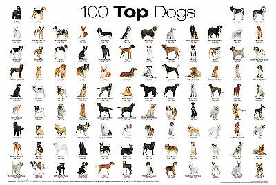 Top 100 Dog Breed Wall Poster