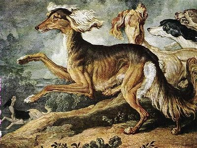 Persian Greyhound Saluki - Vintage Color Dog Print - MATTED