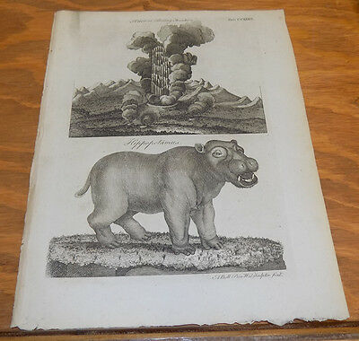 1797 Antique Print///HIPPOPOTAMUS and BOILING FOUNTAIN (Hot Springs)
