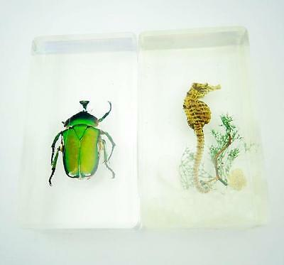 Pair Handmade Beetle Lucid Taxidermy Fashion Paperweight