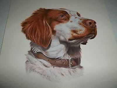Collectible BRITTANY SPANIEL Dog ~Quality Breed Print 1984 CRUWYS Poster Litho