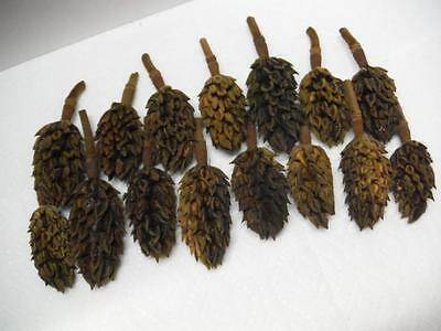 Dried Magnolia Seed Pods No Seeds Crafts Holiday Decor 100% Natural 15pc Lot B