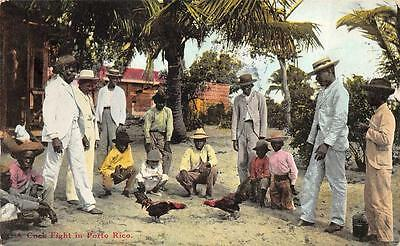 A Cock Fight In Puerto Rico Poultry Postcard 1913