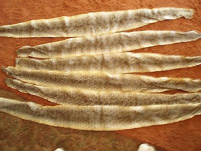 6 rattlesnake skins prairie wholesale lot hide soft tanned SUPER DEAL 35-41 in.