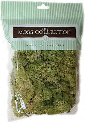 Preserved Reindeer Moss 108.5 Cubic Inches-Spring Green 740657070338