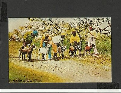 Vintage Colour Postcard Greetings from Tobago  Goat-racing Buccoo posted