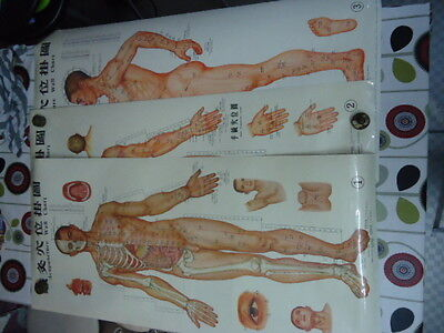 3 Vintage Large Professional Acupuncture Laminated Wall Charts 1970s?