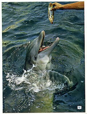 Bottle Nosed Dolphin - Marineland - Morecambe - Postcard View